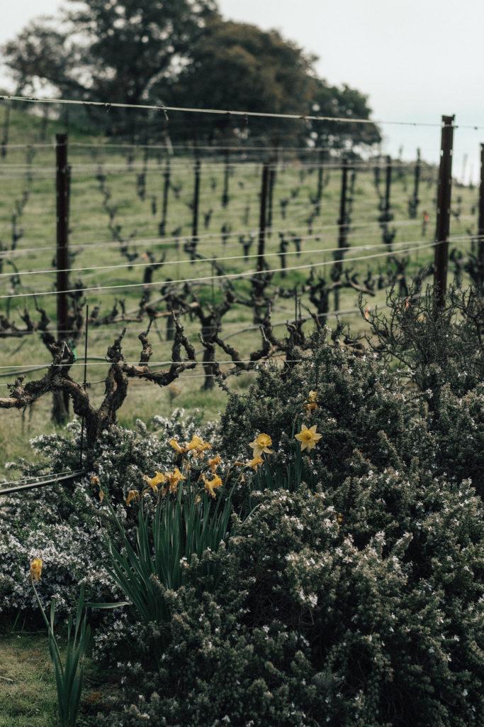 Combo Wine Tour of Napa and Sonoma